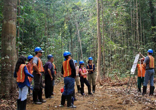 O uso de drones no monitoramento do manejo sustentável será adotado pelo Serviço Florestal Brasileiro.