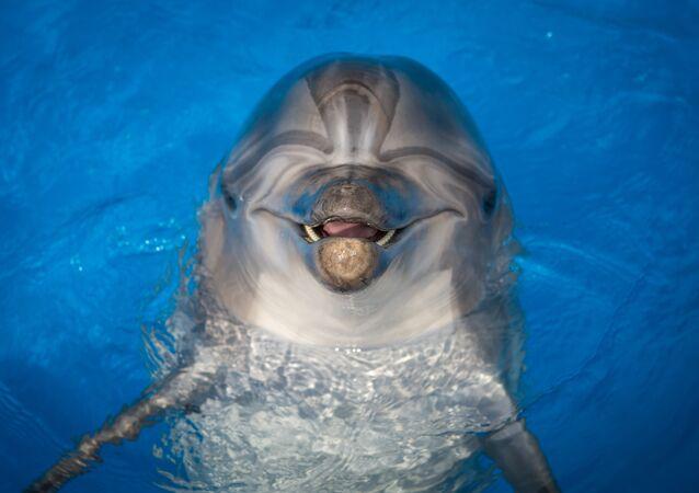 Golfinho. Foto de arquivo