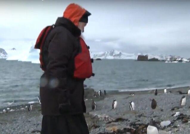 Patriarca batiza pinguinos
