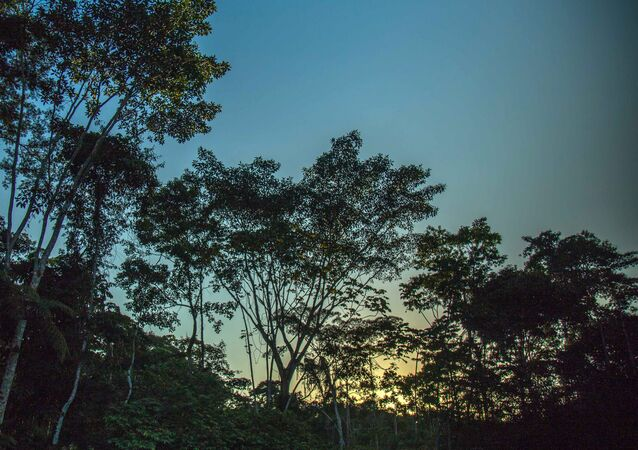 A floresta amazônica (foto de arquivo)