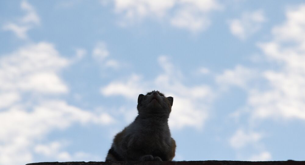 Um gato (foto de arquivo)