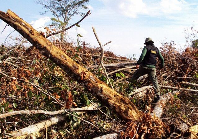 Operação do Ibama contra o desmatamento na Amazônia (imagem referencial)