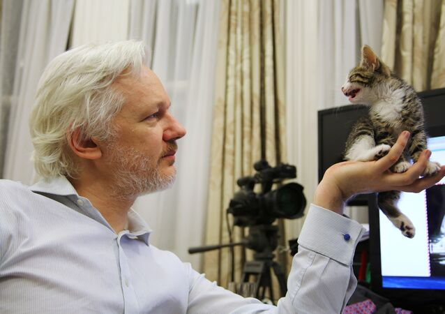 Julien Assange mostra seu gato na Embaixada do Equador em Londres