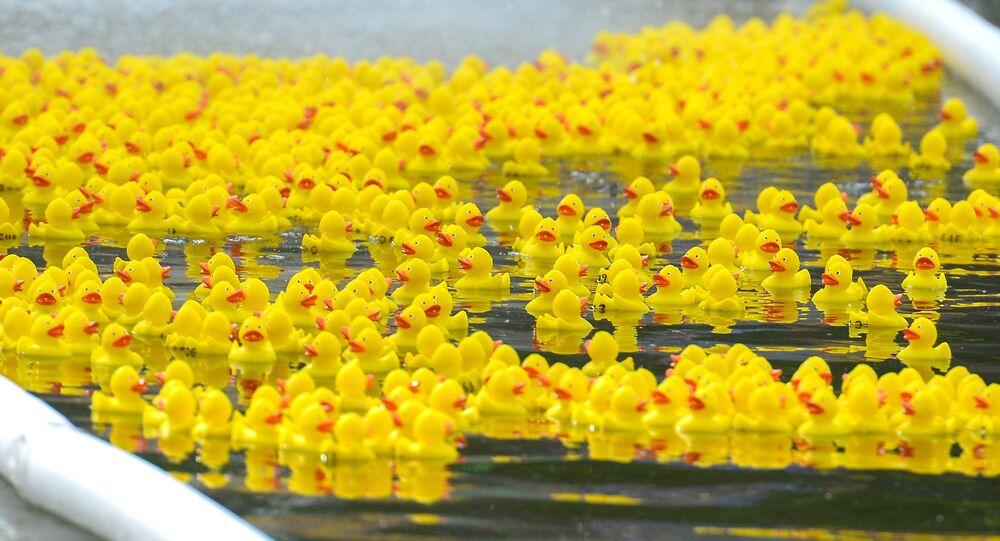 patos de borracha nadam no lago
