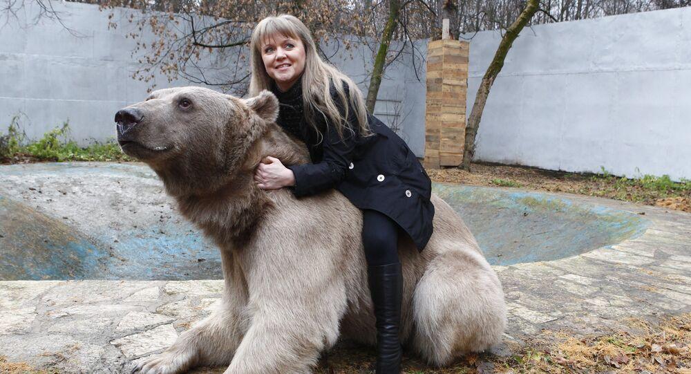 Urso Stepan vive no parque Losiny Ostrov