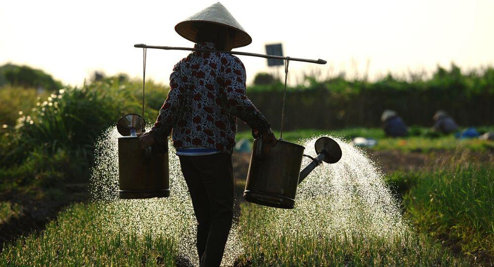 Irrigação na agricultura.