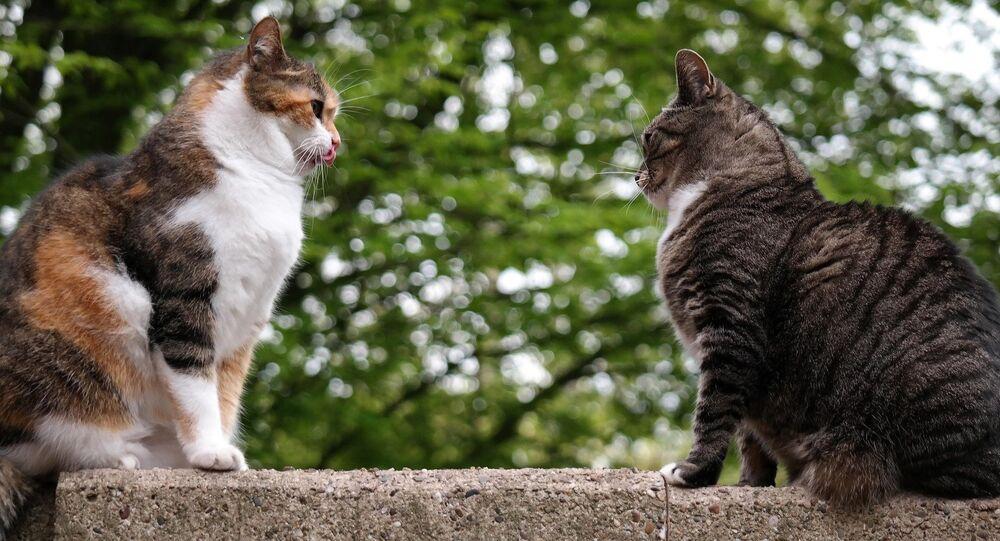 Gatos e capivaras, ursos e pessoas, tigres e bodes. A natureza está sempre nos surpreendendo com amizades incomuns.