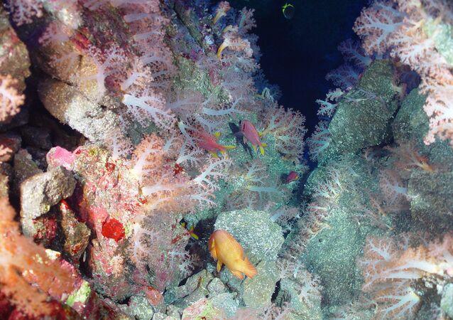 Paisagem submarina da Fossa das Marianas