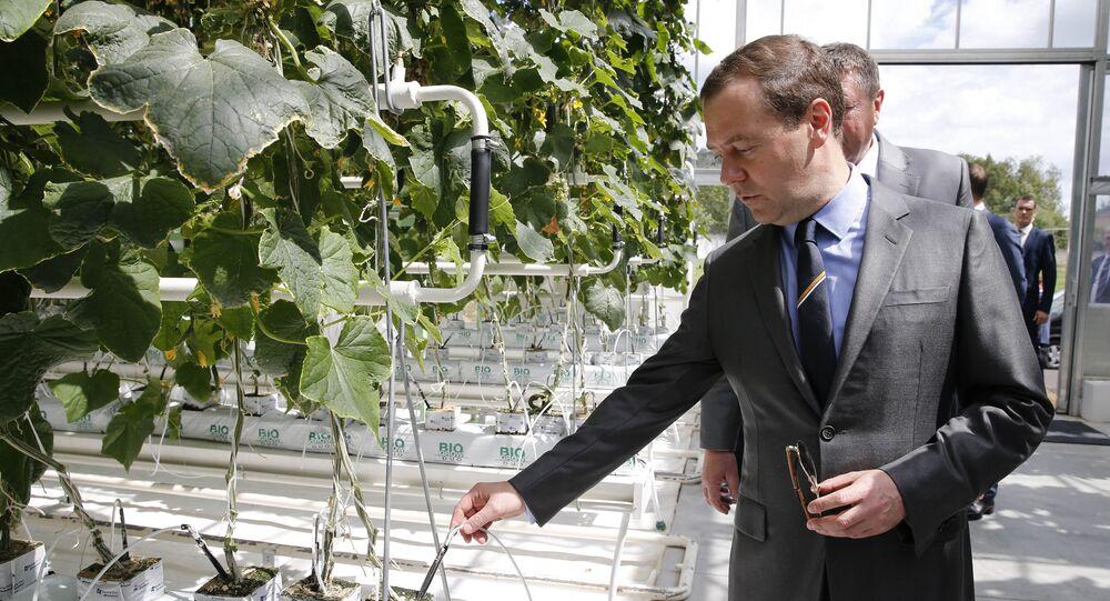 5 de julho, 2016. O chefe do governo russo Dmitry Medvedev durante a visita à empresa agrícola Matveevskoye na região de Moscou