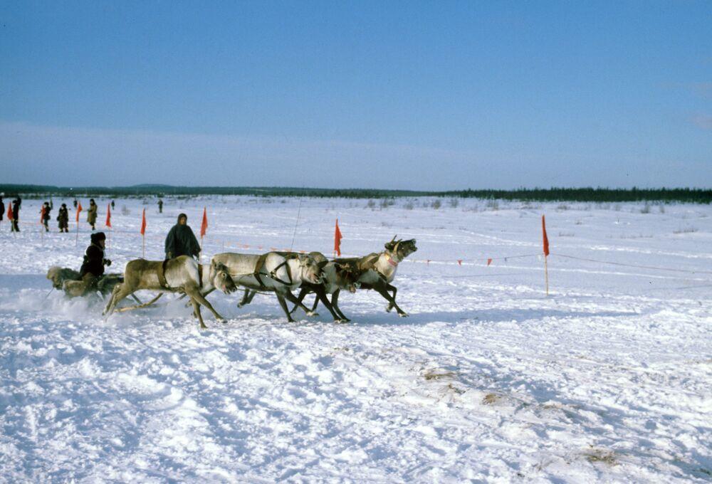 Os sámi ou lapões são o povo indígena da região.