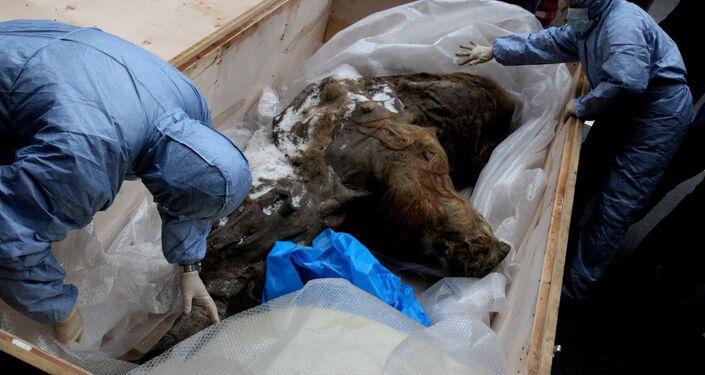 Mamute encontrado na Rússia