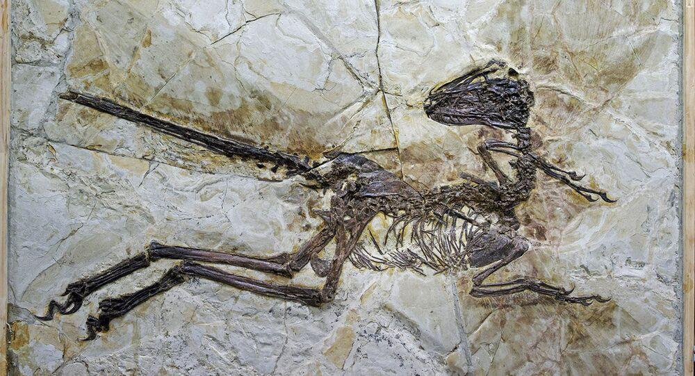Fóssil de dinossauro (imagem de arquivo)