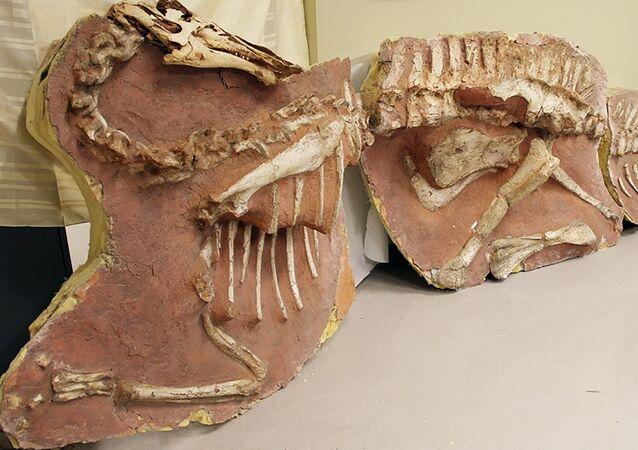 Os restos de dinossauro