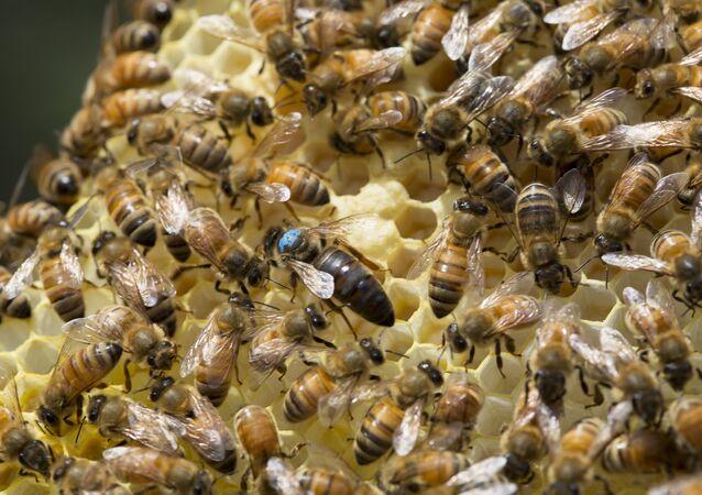 Inseticida utilizado para combater o Aedes Aegypti em condado da Carolina do Sul deixou de ser aplicado após incidente