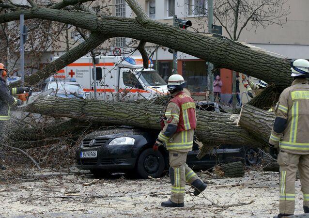 Queda de árvore na Alemanha durante a tempestade Niklas.