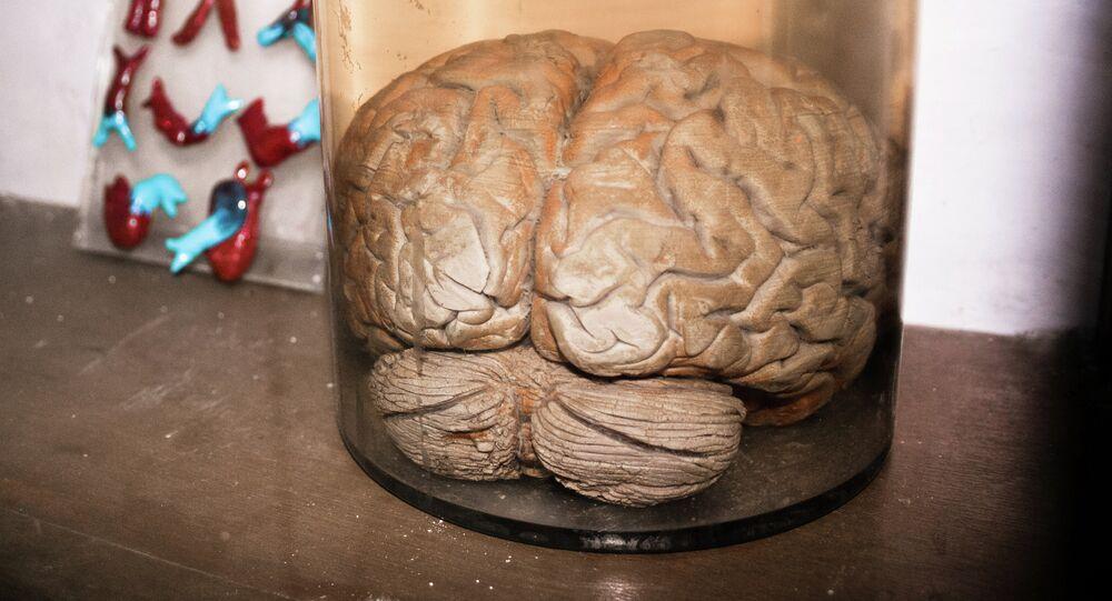 Um cérebro
