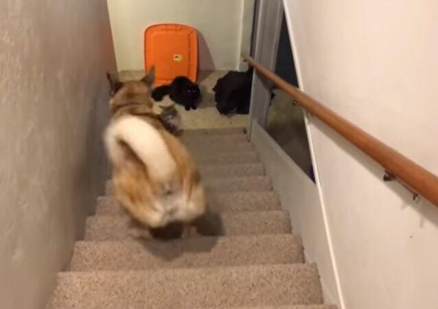 Cachorro tira onda subindo escadas de costas