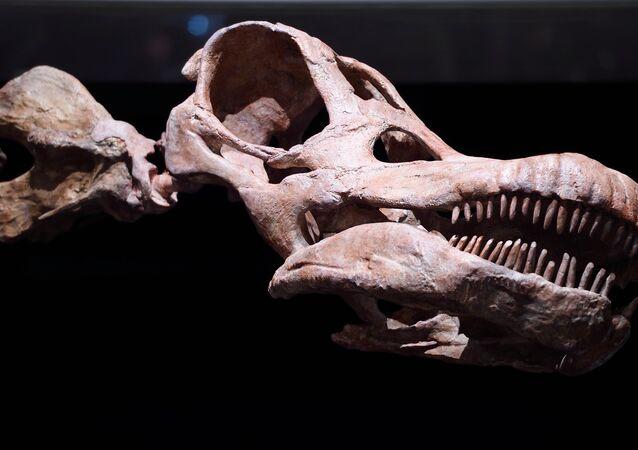 Titanossauro, maior dinossauro exibido no Museu Histórico Nacional em Nova York, 2016