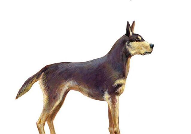 Cão pré-histórico do Brasil