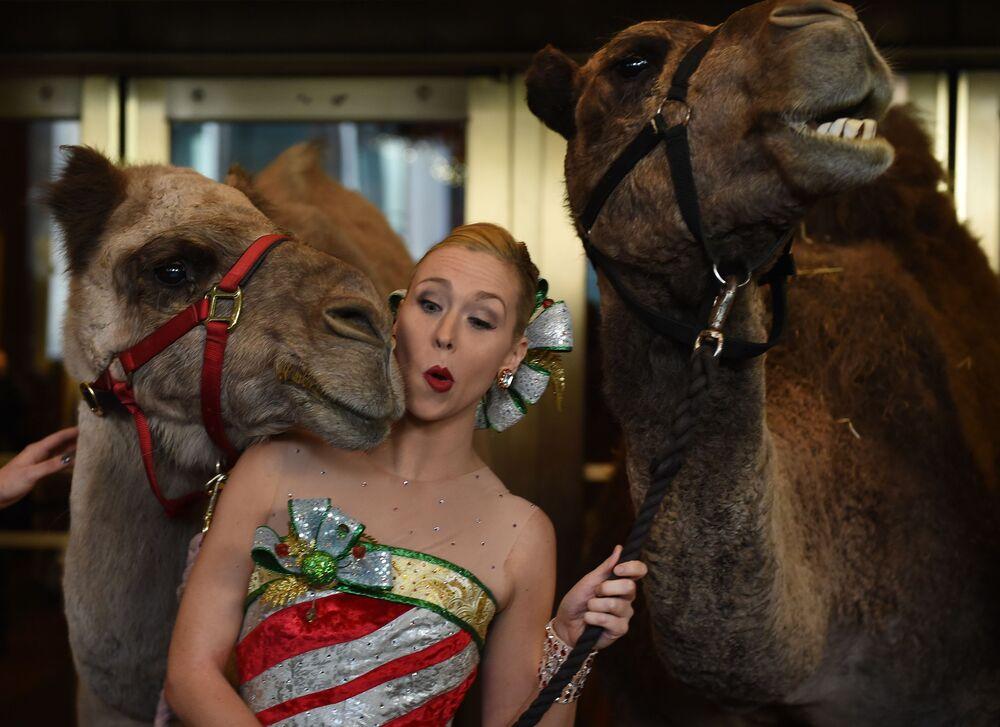 Preparativos para o espetáculo tradicional de Natal em Nova York.  A atuação deste ano contará com a participação de animais