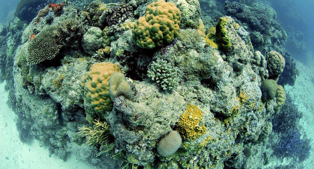 Grande Barreira de Coral, Austrália, Oceano Pacífico