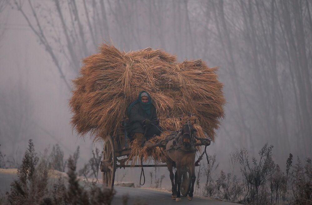 Homem dirige carro com feno na cidade indiana de Srinagar