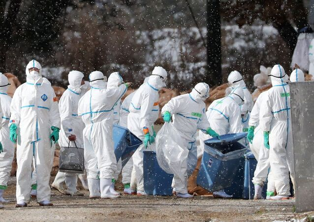 Workers wearing protective suits cull ducks after some tested positive for H5 bird flu at a poultry farm in Aomori, northern Japan, in this photo taken by Kyodo November 29, 2016.