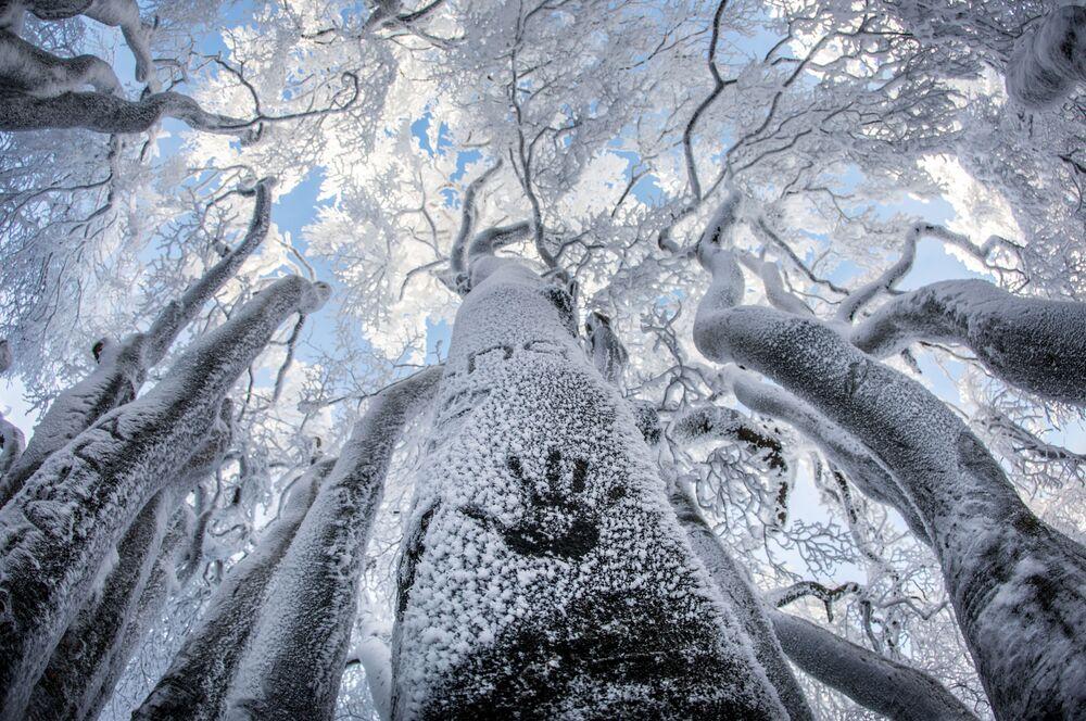 Marca de mão no tronco gelado de árvore na Alemanha