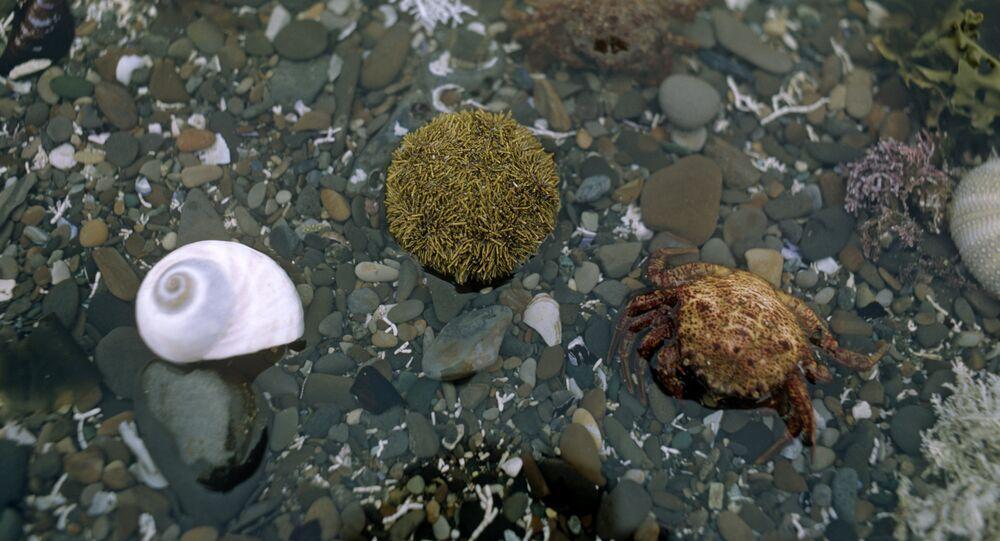 Animais marinhos na faixa costeira da Ilha de Bering (ilustrativa)