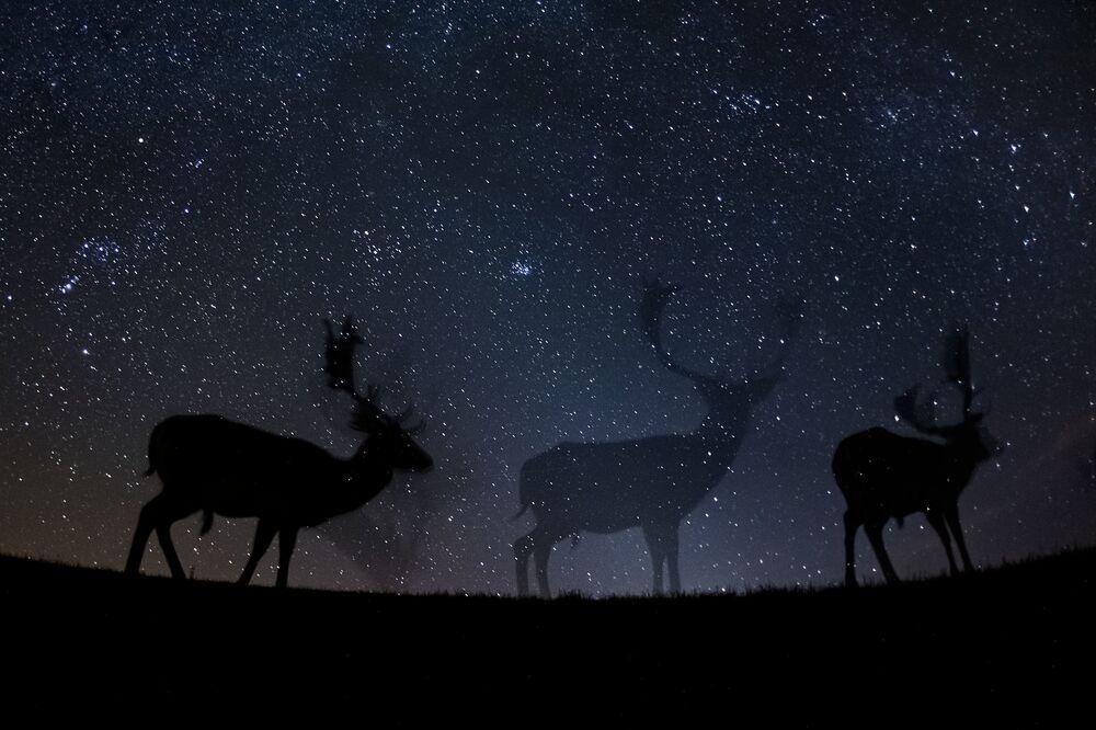 Imagem da série Agora Você Me Vê, tirada por Bence Máté, que ocupou o 3º lugar na categoria Histórias da Natureza mostra um gamo passeando no silencio da noite