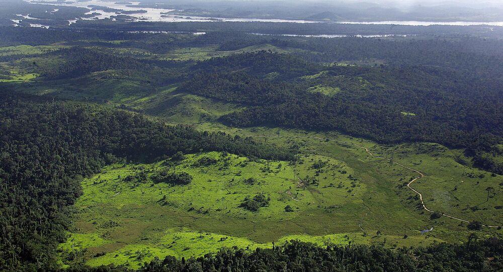 Civilizações pré-colombianas moldaram Floresta Amazônica