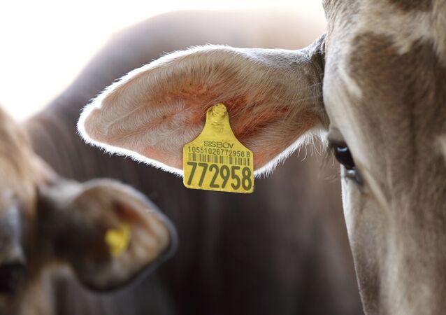 Agronegócio critica ação da PF na Operação Carne Fraca