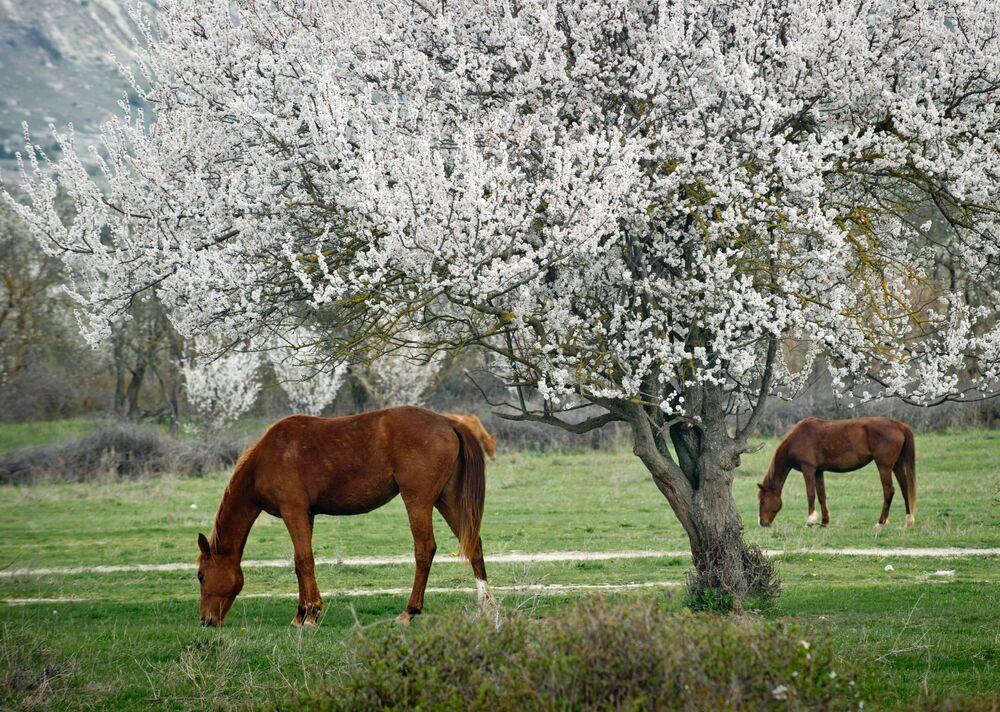 Cavalos pastando perto da montanha Rocha Branca, na Crimeia