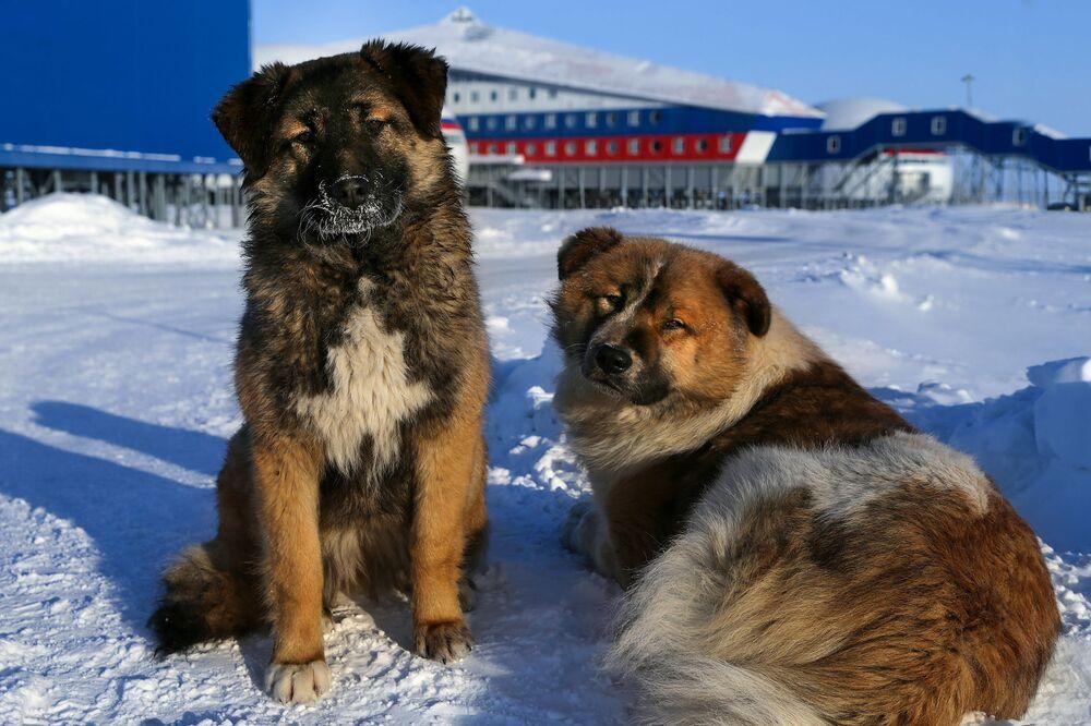 Essa imagem mostra cães que morram na base militar russa