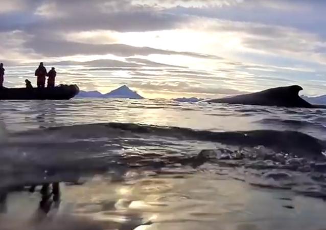 Os cientistas fizeram um vídeo, pondo a câmera nas costas de uma baleia, que mostra as águas do oceano Pacífico