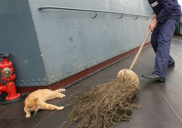 Un gato en la cubierta de un buque