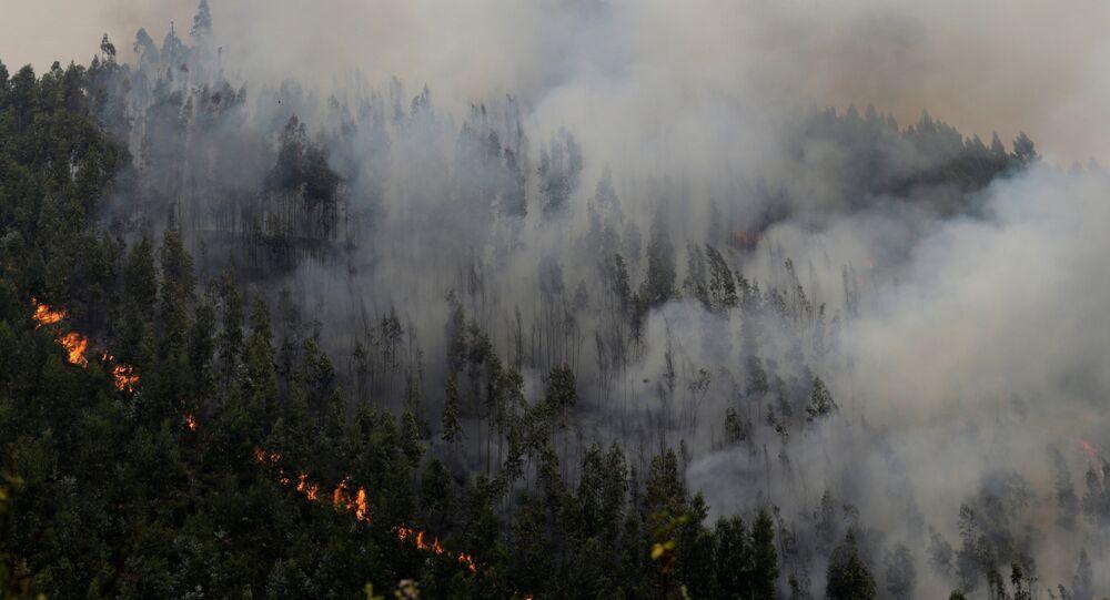 Incêndio florestal (foto de arquivo)