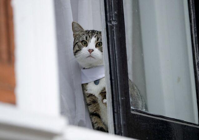 O Gato da embaixada tem contas no Instagram e Twitter