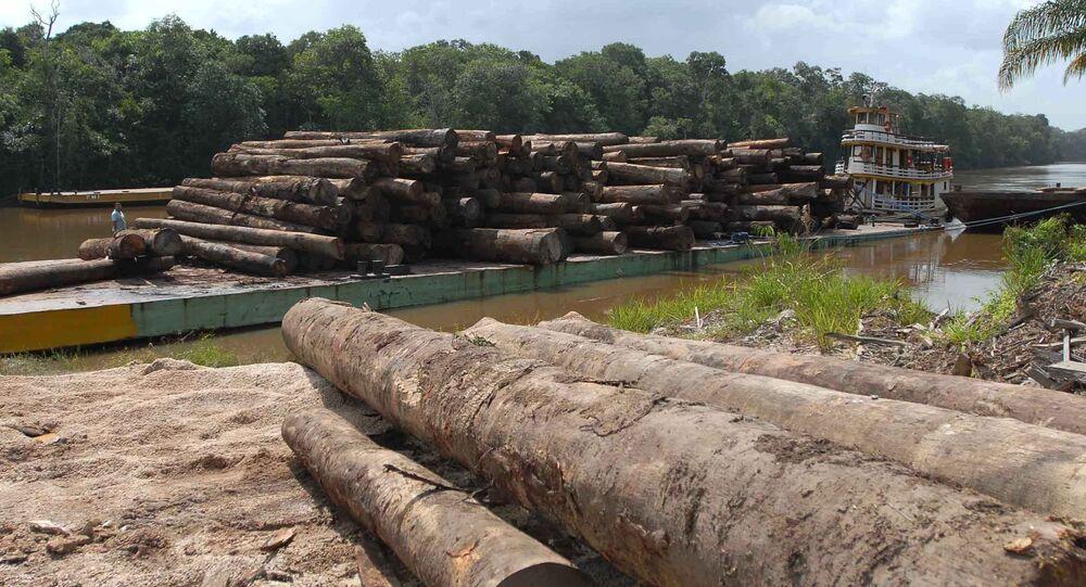 Dos 200 assassinatos de ambientalistas ocorridos em todo o mundo no ano passado, 49 aconteceram no Brasil