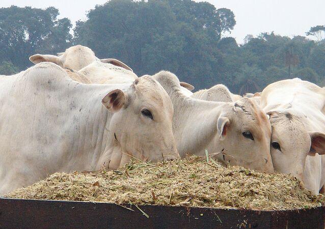 Brasil tenta levantar embargo americano à carne