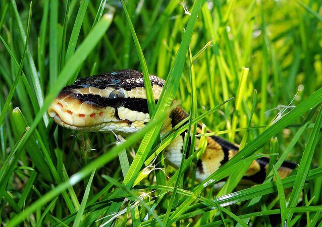 Serpente (imagem ilustrativa)