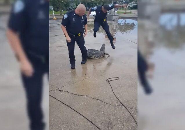 Aligátor mordeu a perna de um policial norte-americano
