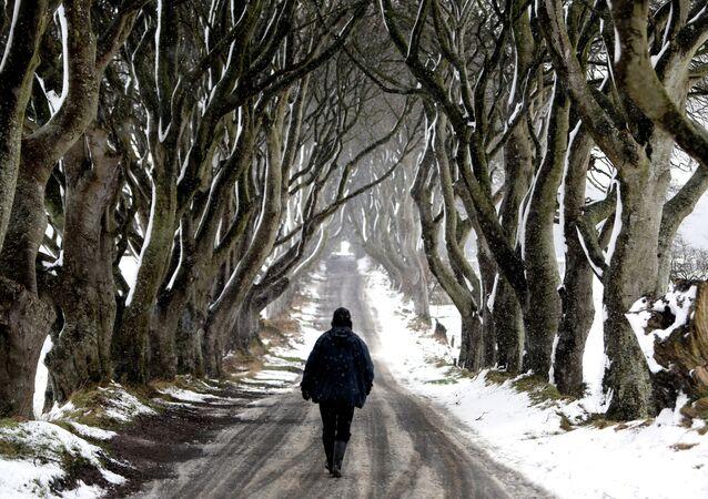 Túnel de árvores do Dark Hedges, onde foram gravadas cenas da série Game of Thrones, Irlanda do Norte