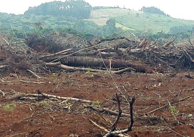 Europa quer incluir proteção ambiental no acordo com o Mercosul