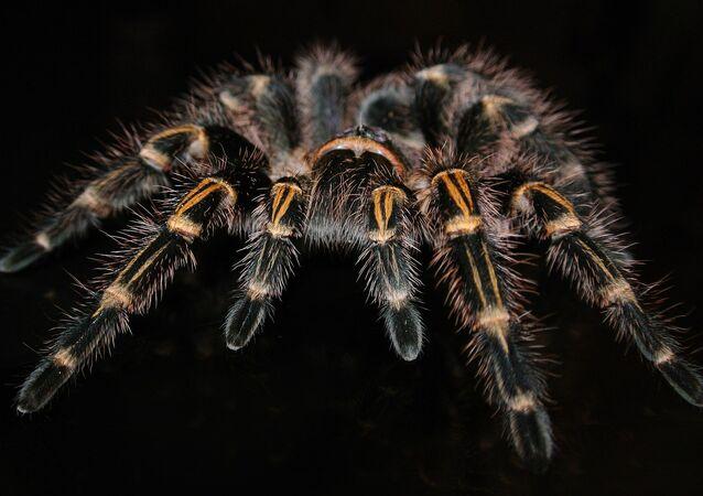 Aranha (imagem ilustrativa)