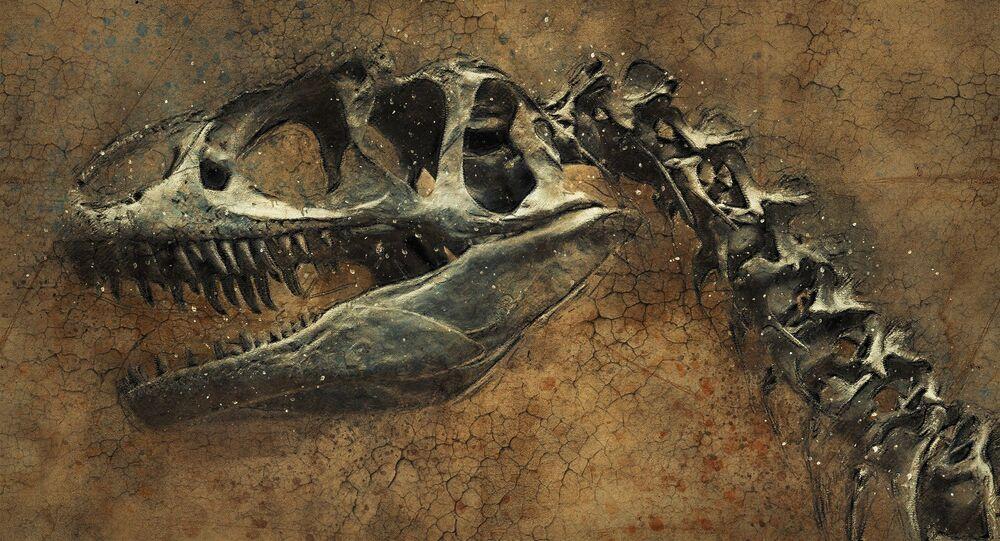 Dinossauro (imagem de arquivo)