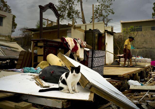 Consequências do furacão Maria em Porto Rico