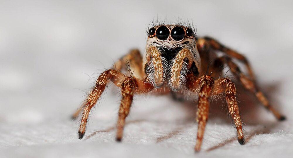 Aranha (arquivo)