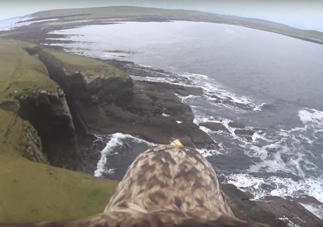 Com olhos de águia: pairando nas alturas inacessíveis