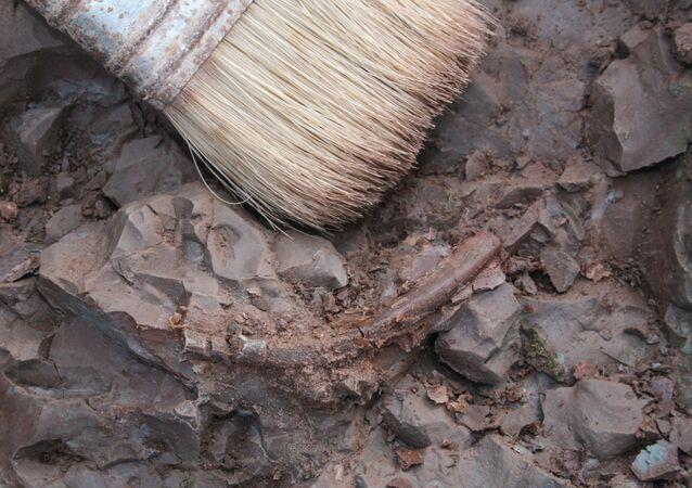 Escovações arqueológicas (imagem referencial)